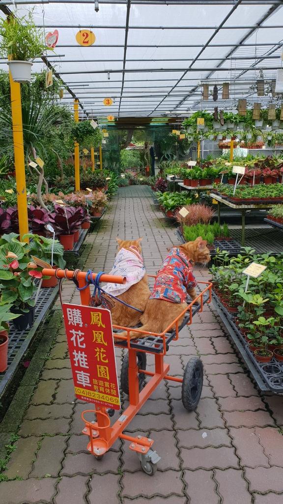 145588.jpg - 【彰化.田尾】鳳凰花園&窄巷咖啡。田尾最美麗花園植物種類超多推薦。低消100水果免費吃