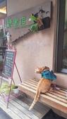 【中和.永和】智光商職巷弄中。文青二手書店。店狗好可愛的綠書店:20191101_144152.jpg
