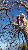 【南投.信義】1月季節限定美景。外坪頂蔡家秘境梅園。絕美水池倒影:128177.jpg