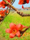 【台南】林初埤。季節限定美麗的木棉花道:IMG_9399.JPG