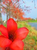【台南】林初埤。季節限定美麗的木棉花道:IMG_9374.JPG