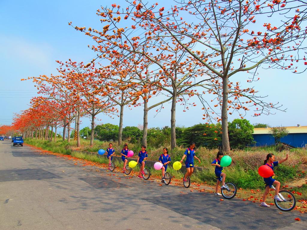 【台南】林初埤。季節限定美麗的木棉花道:IMG_9391.JPG