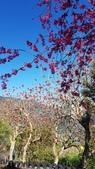 【南投.信義】1月季節限定美景。外坪頂蔡家秘境梅園。絕美水池倒影:128167.jpg