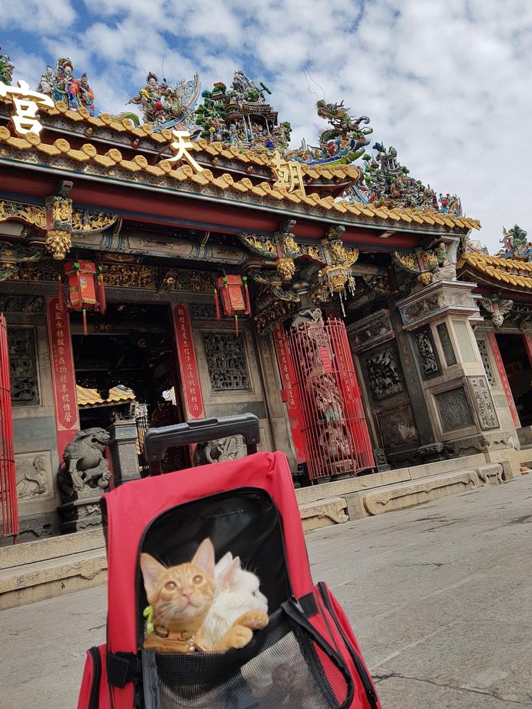 20171207_113424.jpg - 【寵物用品】貓狗外出太空背包兩款推薦(含拉桿款)。南洋峇里spa撰寫