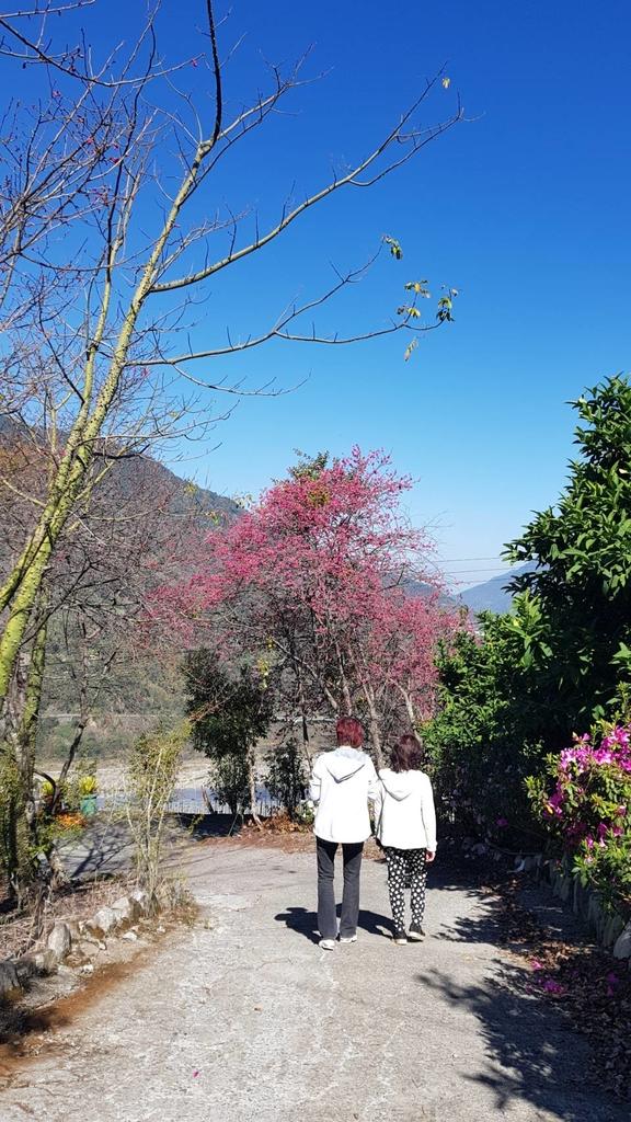 128168.jpg - 【南投.信義】1月季節限定美景。外坪頂蔡家秘境梅園。絕美水池倒影