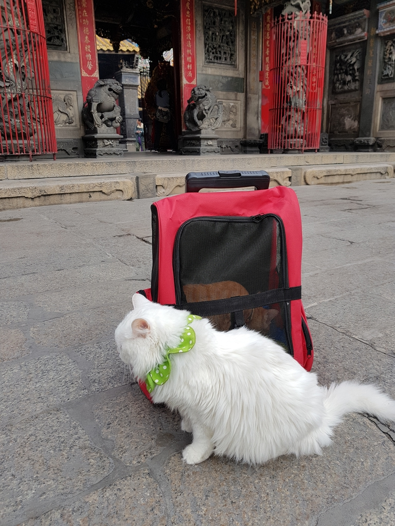 20171207_113729.jpg - 【寵物用品】貓狗外出太空背包兩款推薦(含拉桿款)。南洋峇里spa撰寫