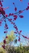 【南投.信義】1月季節限定美景。外坪頂蔡家秘境梅園。絕美水池倒影:128174.jpg