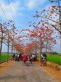 【台南】林初埤。季節限定美麗的木棉花道:IMG_9518.JPG
