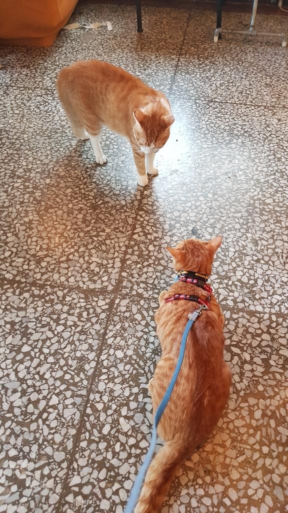 【花蓮】夏天就是要吃冰。正當冰貓咪中途友善寵物冰店:20180813_125933.jpg