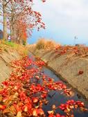 【台南】林初埤。季節限定美麗的木棉花道:IMG_9526.JPG