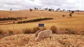 【澳洲.墨爾本】2019住宿推薦。Wirraway Farm Stay超美麗農場景致:20190212_093059.jpg