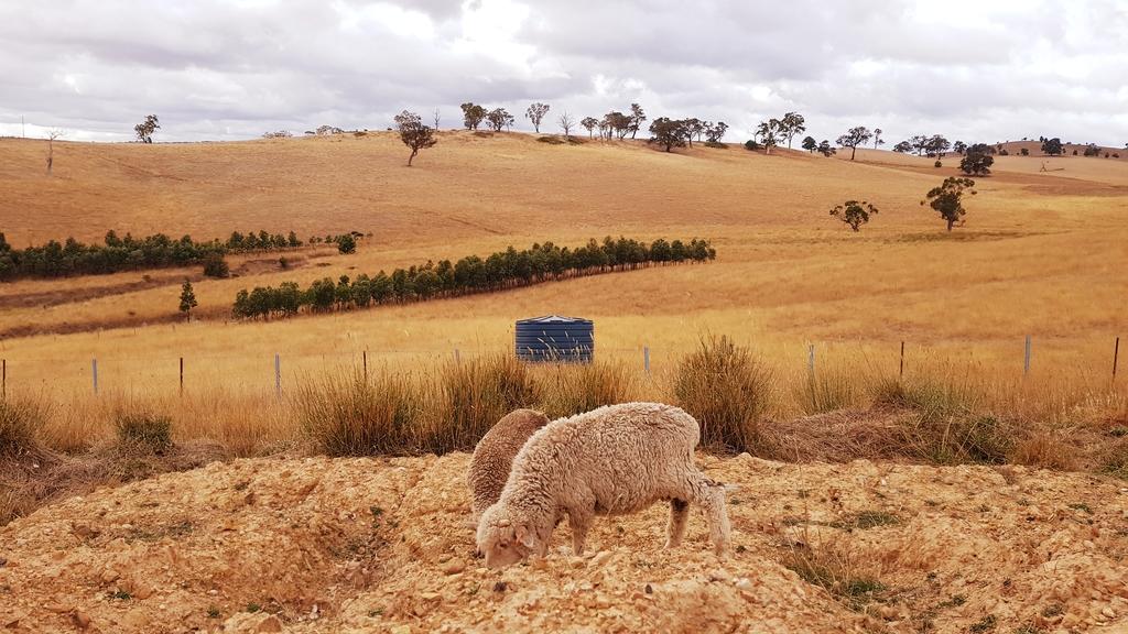 20190212_093059.jpg - 【澳洲.墨爾本】2019住宿推薦。Wirraway Farm Stay超美麗農場景致