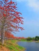 【台南】林初埤。季節限定美麗的木棉花道:IMG_9369.JPG