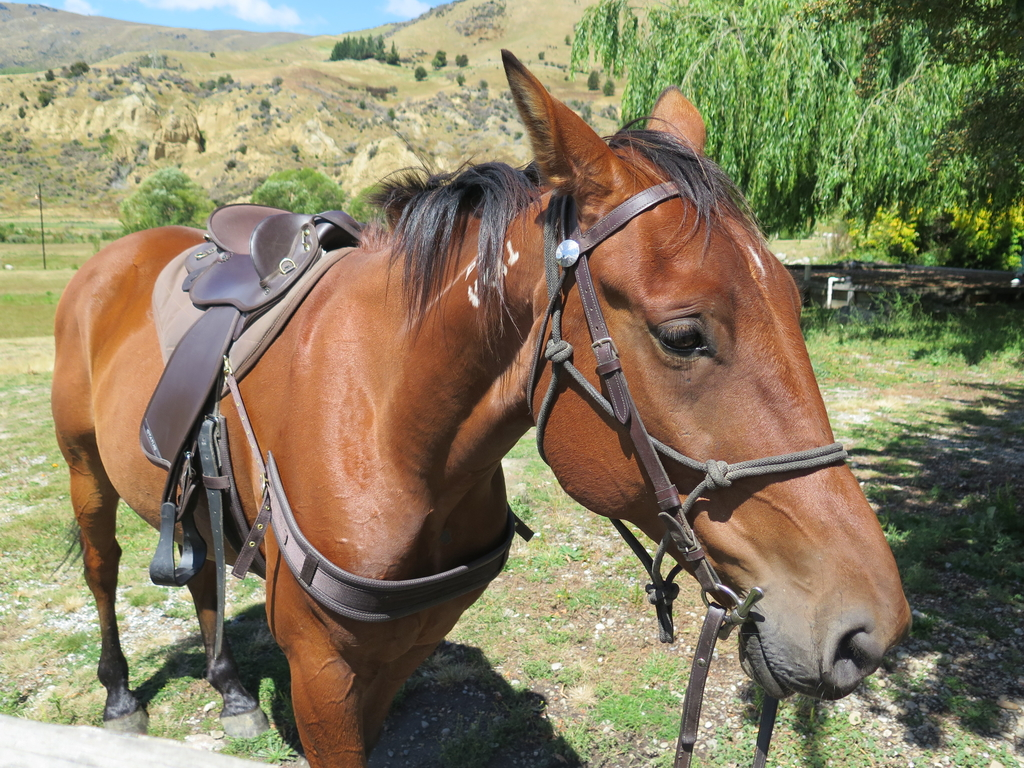 IMG_6200.JPG - 【紐西蘭.南島】2017騎馬體驗。Wanaka。MTCARDRONA STATION教練超美