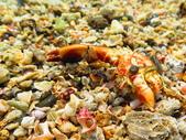 【台北】北海岸石門洞景點。美麗的貝殼砂海灘。熱門觀看夕陽&潮間帶景點:IMG_9658.JPG