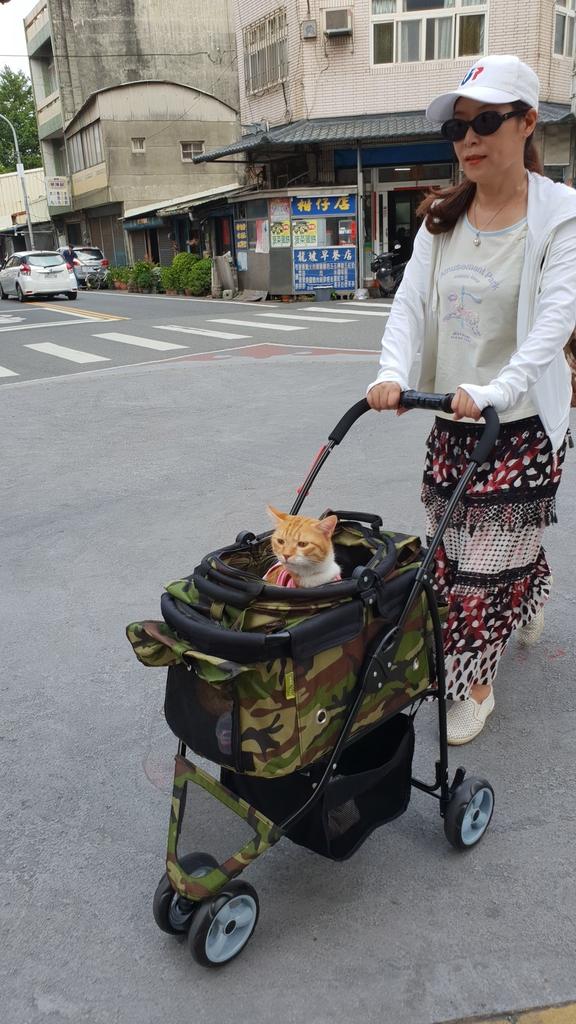 147009.jpg - 【台北.永和】沛德奧PETTRO寵物推車。貓狗都適合。輪子超好推簡易收納超輕骨架