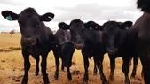 【澳洲.墨爾本】2019住宿推薦。Wirraway Farm Stay超美麗農場景致:20190212_092607.jpg