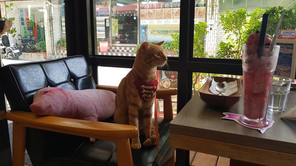 20180712_160202.jpg - 【台北.公館】彼克蕾咖啡義大利麵下午茶專賣店。寵物友善餐廳上牽繩可落地