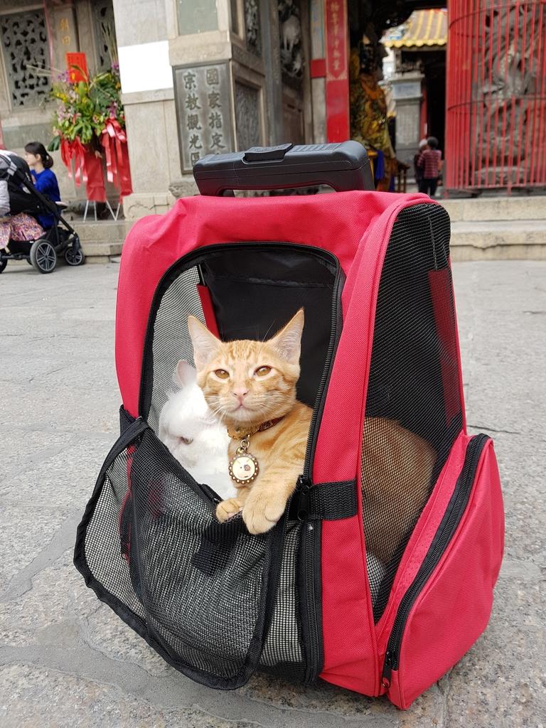 20171207_114403.jpg - 【寵物用品】貓狗外出太空背包兩款推薦(含拉桿款)。南洋峇里spa撰寫
