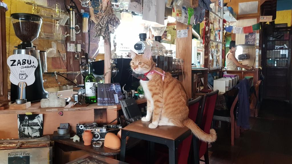 20190823_134456.jpg - 【台北.天母】午餐.晚餐下午茶推薦。ZABU老屋咖啡廳迷人的復古氣息。友善寵物咖啡廳