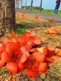 【台南】林初埤。季節限定美麗的木棉花道:IMG_9481.JPG