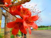 【台南】林初埤。季節限定美麗的木棉花道:IMG_9411.JPG