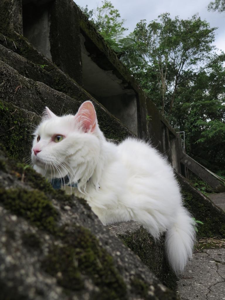 IMG_1664.JPG - 【台北.平溪】平溪小祕境。偶像劇妹妹拍攝地。石底大斜坑拍寵物寫真球球篇