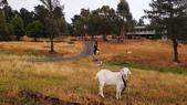 【澳洲.墨爾本】2019住宿推薦。Wirraway Farm Stay超美麗農場景致:69683820_3102174979853562_1169130522203389952_o.jpg