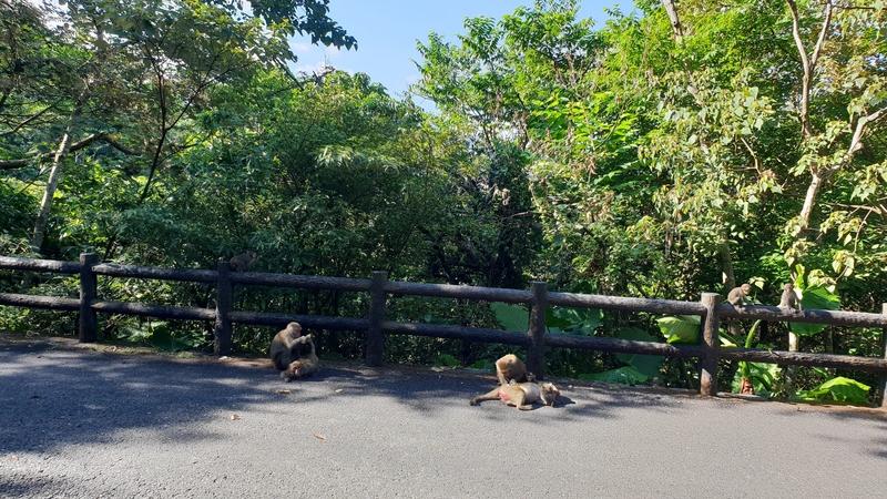 149803.jpg - 【宜蘭.冬山】免費景點推薦。仁山植物園寵物友善空間。猴子大肆出沒超可愛