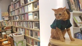 【中和.永和】智光商職巷弄中。文青二手書店。店狗好可愛的綠書店:20191101_144852.jpg