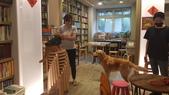 【中和.永和】智光商職巷弄中。文青二手書店。店狗好可愛的綠書店:20191101_144946.jpg