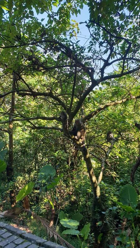 149804.jpg - 【宜蘭.冬山】免費景點推薦。仁山植物園寵物友善空間。猴子大肆出沒超可愛