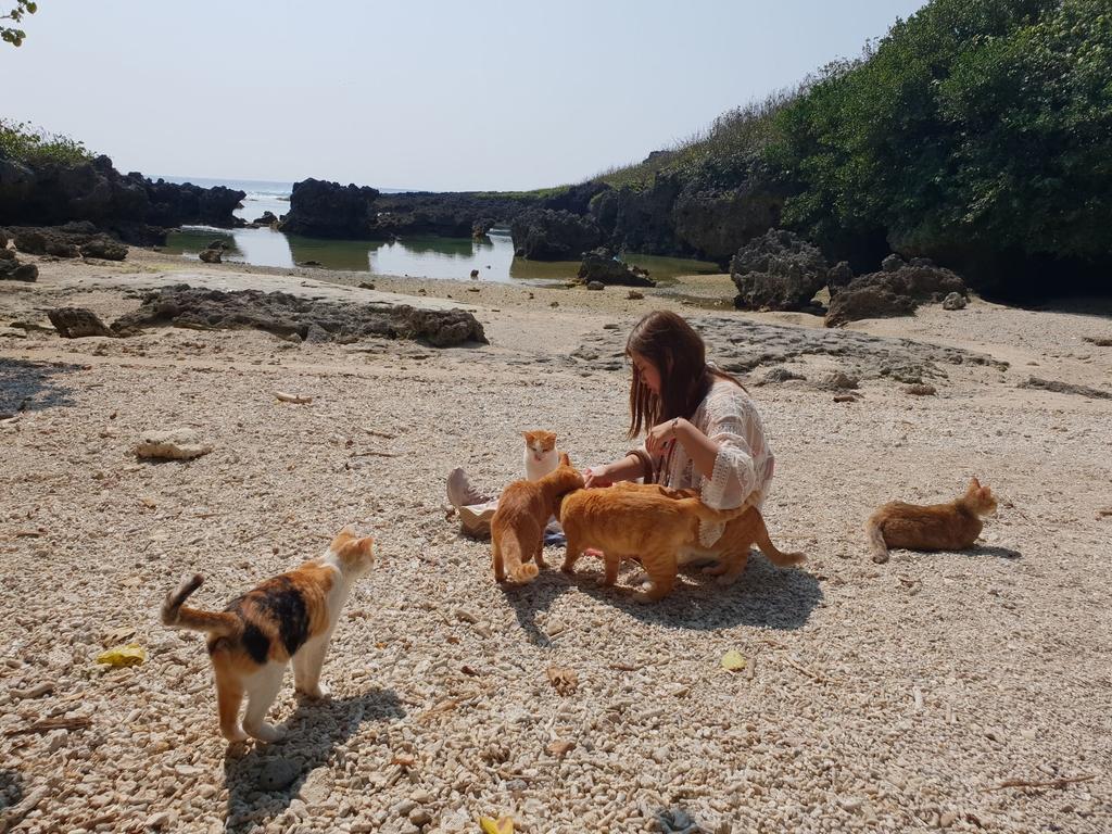 241273.jpg - 【屏東.恆春】小峇里島岩。記得帶肉泥。可以享受被貓咪包圍的感覺。這裡夕陽超美麗