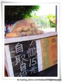 【台東】台11線152.5餵魚區:IMG_4555.JPG