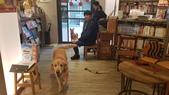 【中和.永和】智光商職巷弄中。文青二手書店。店狗好可愛的綠書店:20191101_144326.jpg