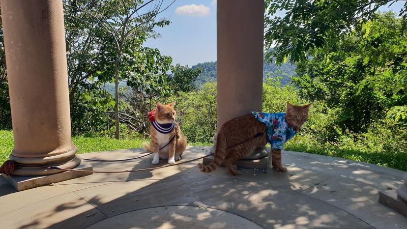 149783.jpg - 【宜蘭.冬山】免費景點推薦。仁山植物園寵物友善空間。猴子大肆出沒超可愛