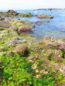 【台北】北海岸石門洞景點。美麗的貝殼砂海灘。熱門觀看夕陽&潮間帶景點:IMG_9616.JPG