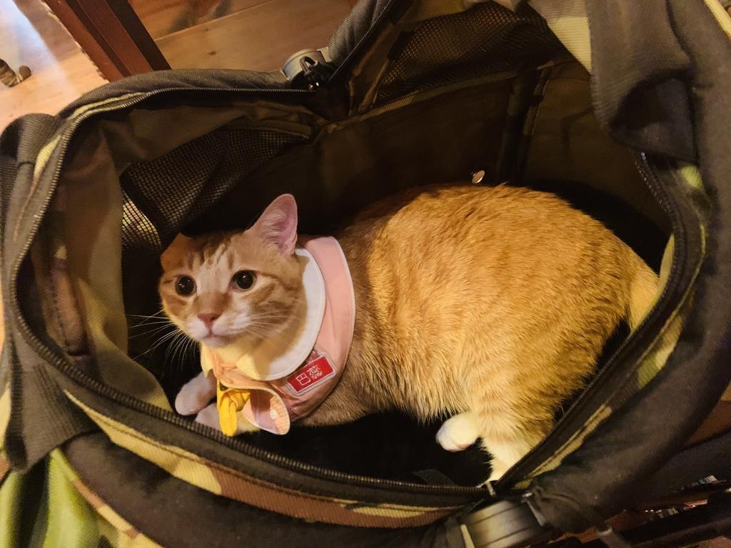 S__8724678.jpg - 【台北.永和】沛德奧PETTRO寵物推車。貓狗都適合。輪子超好推簡易收納超輕骨架