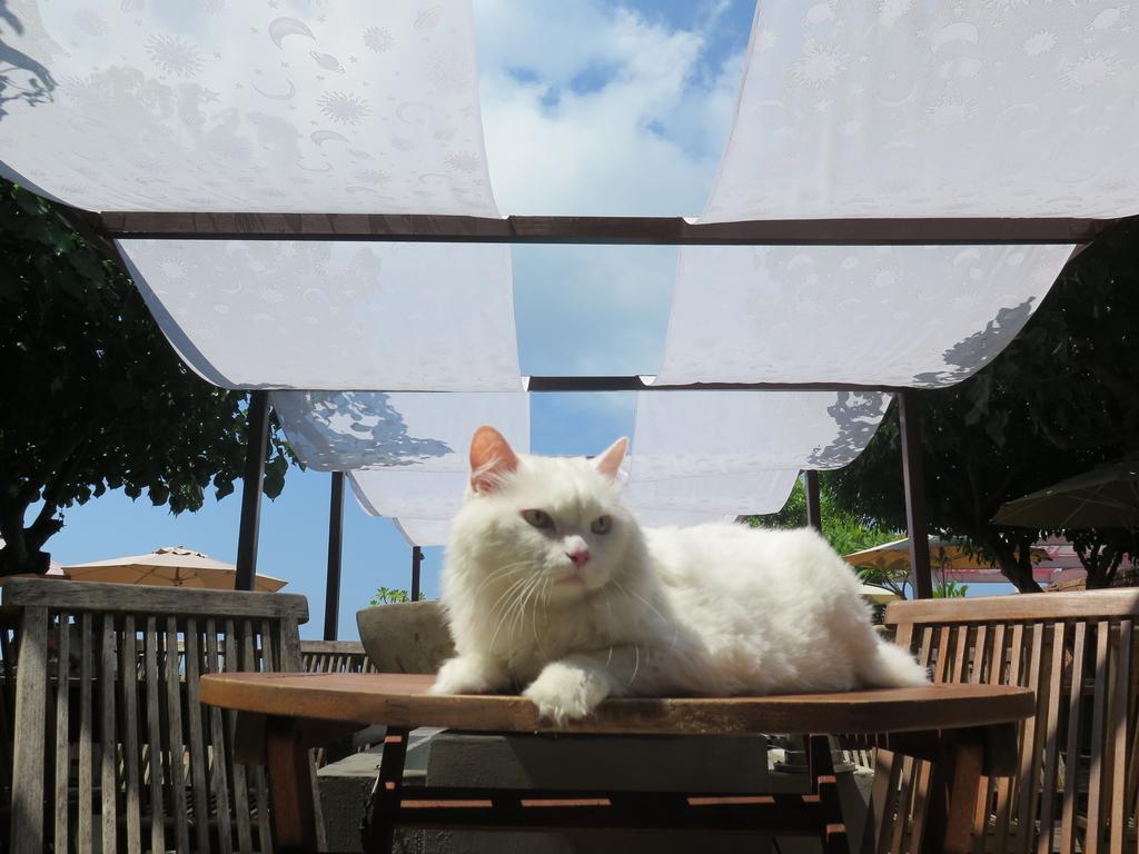 IMG_5587.JPG - 【台北】北海岸海景餐廳推薦。Villa sugar 義大利麵.咖啡.冰沙.鬆餅