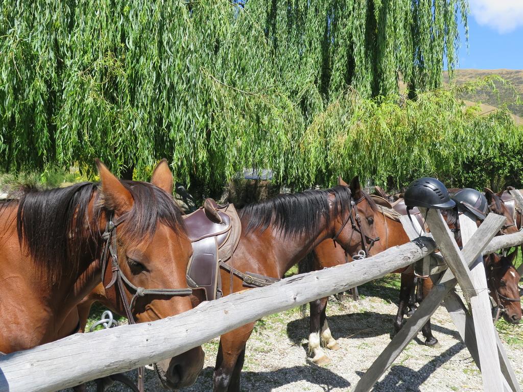 IMG_6204.JPG - 【紐西蘭.南島】2017騎馬體驗。Wanaka。MTCARDRONA STATION教練超美