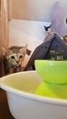 【花蓮】夏天就是要吃冰。正當冰貓咪中途友善寵物冰店:20180813_130053.jpg