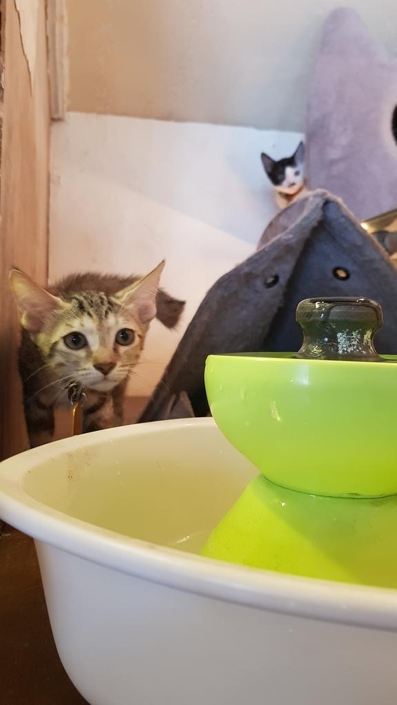 20180813_130053.jpg - 【花蓮】夏天就是要吃冰。正當冰貓咪中途友善寵物冰店