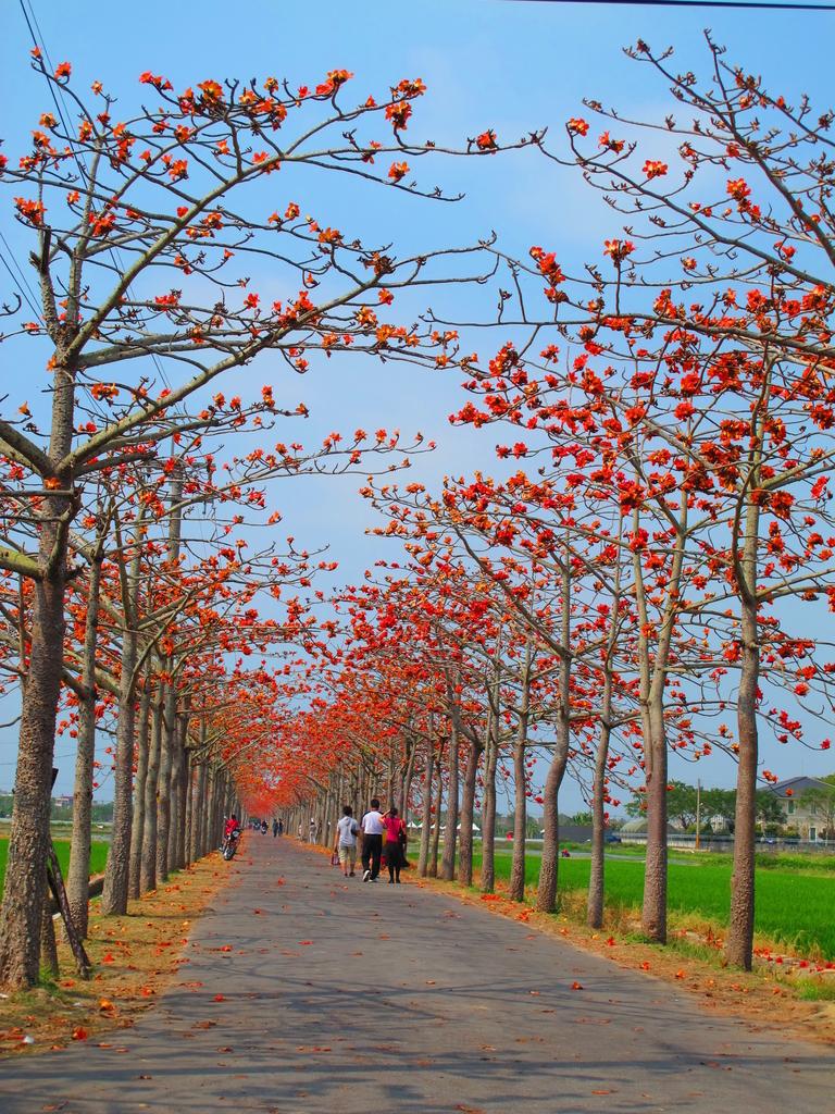 【台南】林初埤。季節限定美麗的木棉花道:IMG_9441.JPG