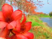 【台南】林初埤。季節限定美麗的木棉花道:IMG_9378.JPG