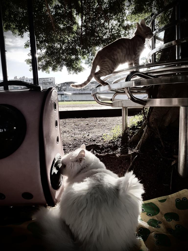 20171121_155610.jpg - 【寵物用品】貓狗外出太空背包兩款推薦(含拉桿款)。南洋峇里spa撰寫