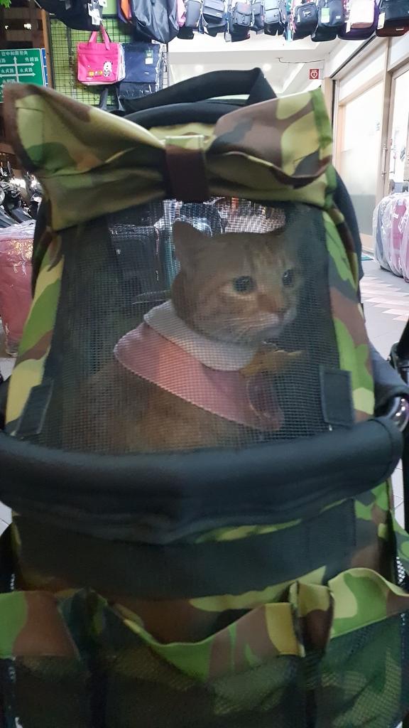 147016.jpg - 【台北.永和】沛德奧PETTRO寵物推車。貓狗都適合。輪子超好推簡易收納超輕骨架