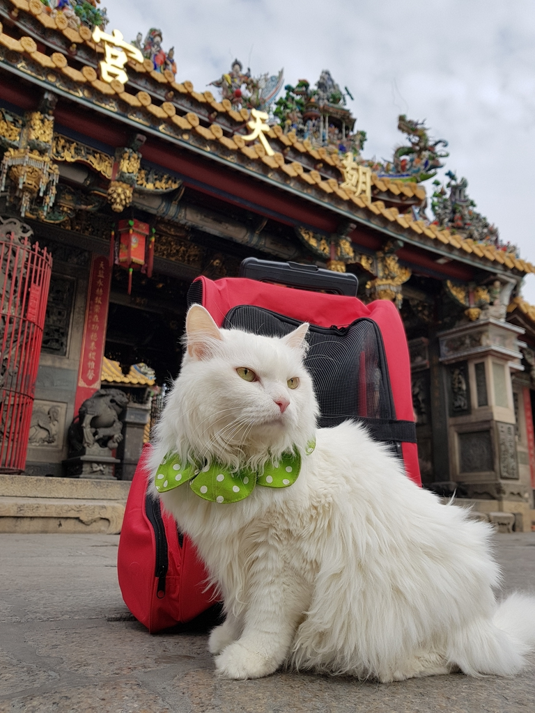 20171207_113835.jpg - 【寵物用品】貓狗外出太空背包兩款推薦(含拉桿款)。南洋峇里spa撰寫