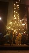 【台北.大安區】舒服生活 Truffles Living寵物友善餐廳。調酒.咖啡.甜點.牛肉麵:20190523_215404.jpg
