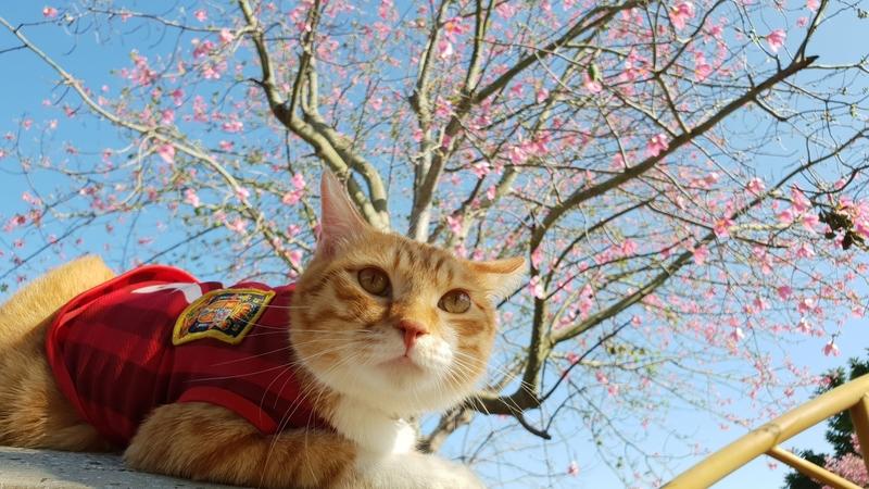 152647.jpg - 【彰化.北斗】免費季節10~12月冬季限定美景推薦。北斗河濱公園美人花盛開中