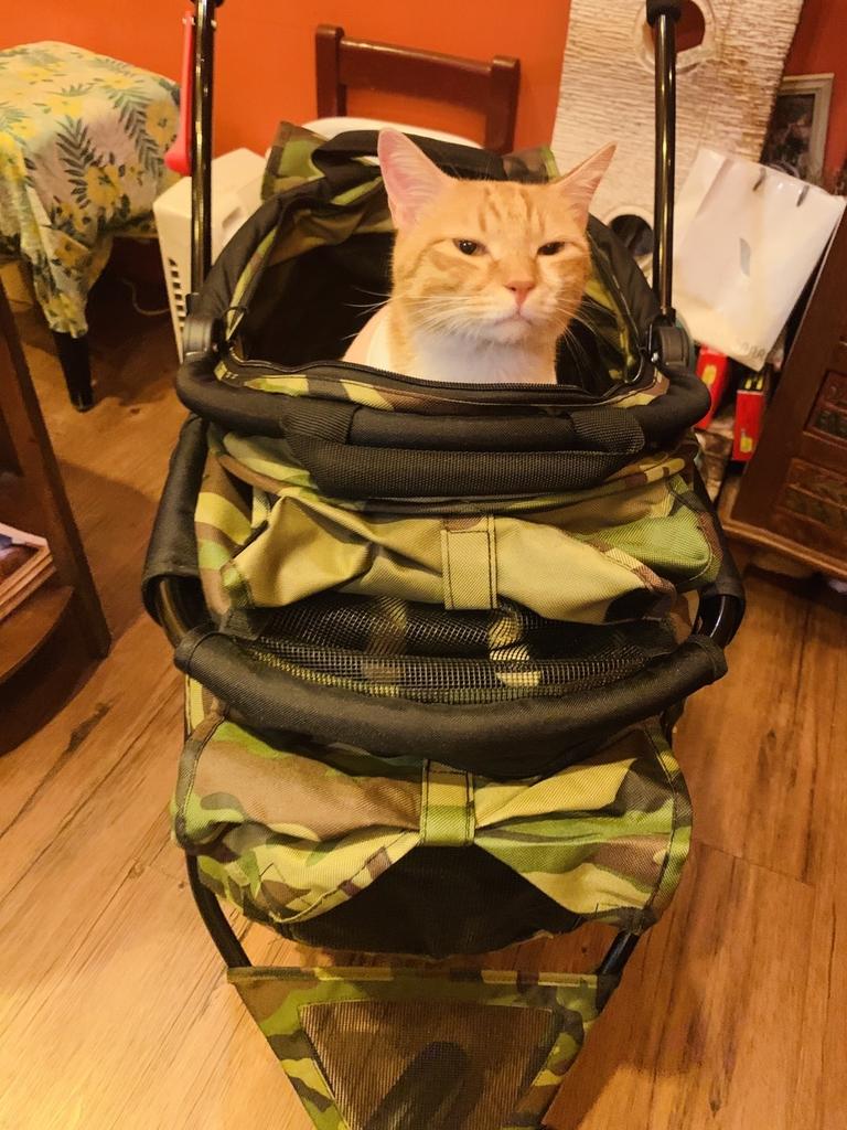 S__8724667.jpg - 【台北.永和】沛德奧PETTRO寵物推車。貓狗都適合。輪子超好推簡易收納超輕骨架